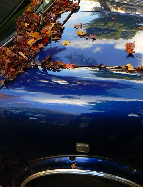 mini_and-leaves